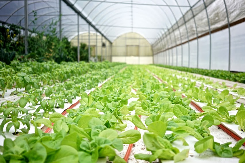 A subtropical hydroponic greenhouse