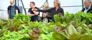 Farm to Cafeteria: an excellent school garden project