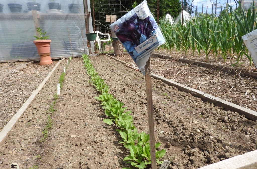 TSS / RRPAG Summer Potluck-at-the-Garden