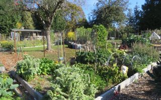 Rainbow Rd. Park Allotment Gardens Update and Plots Available!